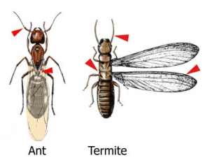 ants and termites are discovered by Mite-e exterminating