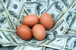 picture of eggs in a nest of money